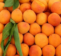 Apricots (3 layer, Approx. 162/168 ct/cs, Size 10, 1/4 cup, Tulare County, 24 lbs)