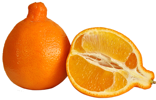 Tangelo, Minneola (1/2 Cup 125 Ct/Cs) Fresno/Tulare