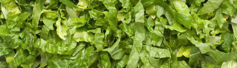 "Lettuce, Romaine 3/8"" Shred (6 x 2lb bags)"